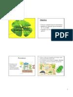 7. Fotosíntesis