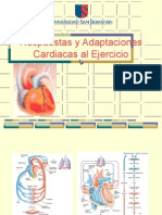 Adaptacion Cardiovascular