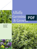 Alfalfa Germination & Growth