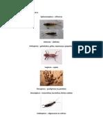 Relação de ordens dos insetos