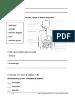 Estudo Do Meio_Corpo Humano