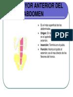 Anatomia Palpatoria Muscular2