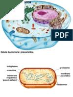 01 Biologia Celular Pro e Eu MP Organelas