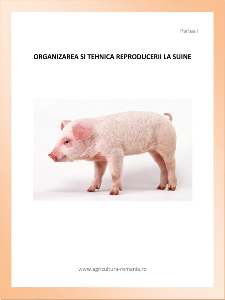 Maturitatea sexuala la porci