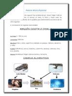 PISOS ECOLOGICOS