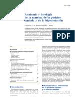2009 Anatomía y fisiología de la marcha, de la posición sentada y de la bipedestación