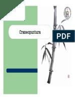 Craneopuntura_2007