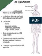 Tema 18 y 21. Diapositivas. Tejido Nervioso y Sistema de Comunicacion Neural Biol-Enf 11-12 Decrypted