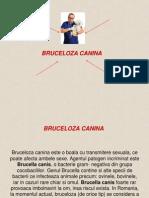 BRUCELOZA+2