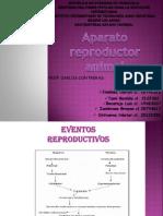 Fisiologia Animal( Aparato Reproductor Animal)