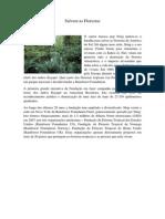 Salvem as Florestas.docx