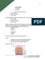 Resume Kuliah Anatomi Gigi