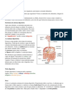 O sistema digestório humano