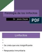 Fisiología de los linfocitos