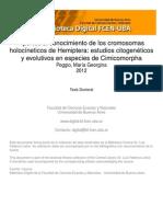 _tesis_cromsomas holocineticos