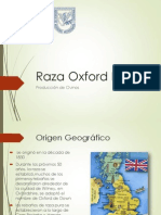 Raza Oxford Down