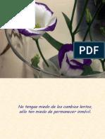 Flores Con Luz-PB