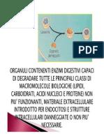 03.Cellula eucariotica virus.pdf