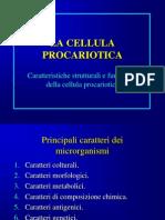 2cellula.pps