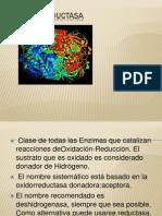 Oxidorreductasa