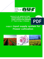Strategies of improving horticulture ( Floriculture ) in Rwanda