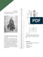 Fucus PDF