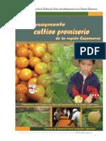 Cadena Del Aguaymanto Documento1