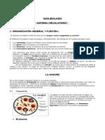 Guía contenidos sistema circulatorio