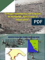 3. Ecología reproductiva del Pingüino de Humboldt - Marco Cardeña