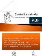 Simturile Cainelui