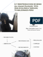 9. Proyecto Mono araña - Raul Bello