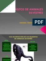 10. Parasitismo en Animales Silvestres - Manuel Tantalean