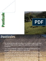 expo pastizal.pptx