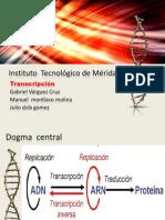 transcripcion del adn a arn