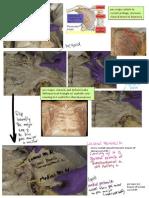 anatomy monster MSK (beamon).pdf