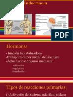 Sistema Endocrino u Hormonal.