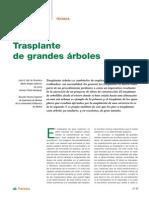 CT3 Trasplante de Grandes Arboles