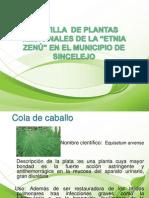 presentacindeplantasmedicinales-cartilla-100512200223-phpapp02
