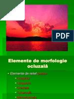 145_morfologie-ocluzala