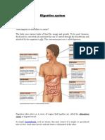Digestive System- Vasanth