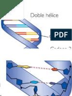 Poster ADN
