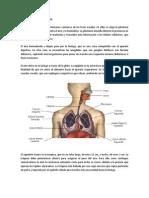 psicomotricidad.docx