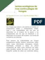 Tratamientos ecológicos de los cultivos contra plagas de hongos