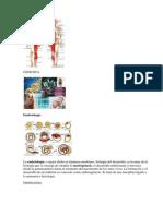 Anatomia y Otras Ciencias - 2013