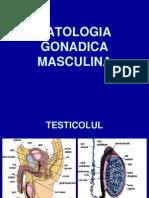 6. 7. Patologia gonadica masculina  2012