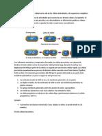 biolo presentacion