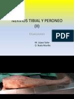 005 Tibial y Peroneo II Diseccion