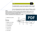 Anatomia de La Horma