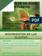 Movimiento en Plantas