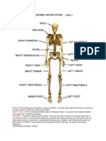 Human Skeleton Instructions